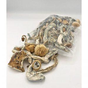 buy magic mushroom.jpg